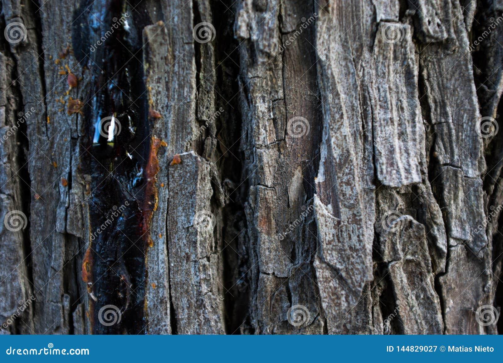 Texture en bois d un arbre