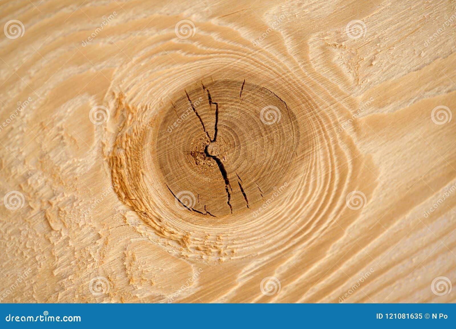 Texture of fractured wood macro