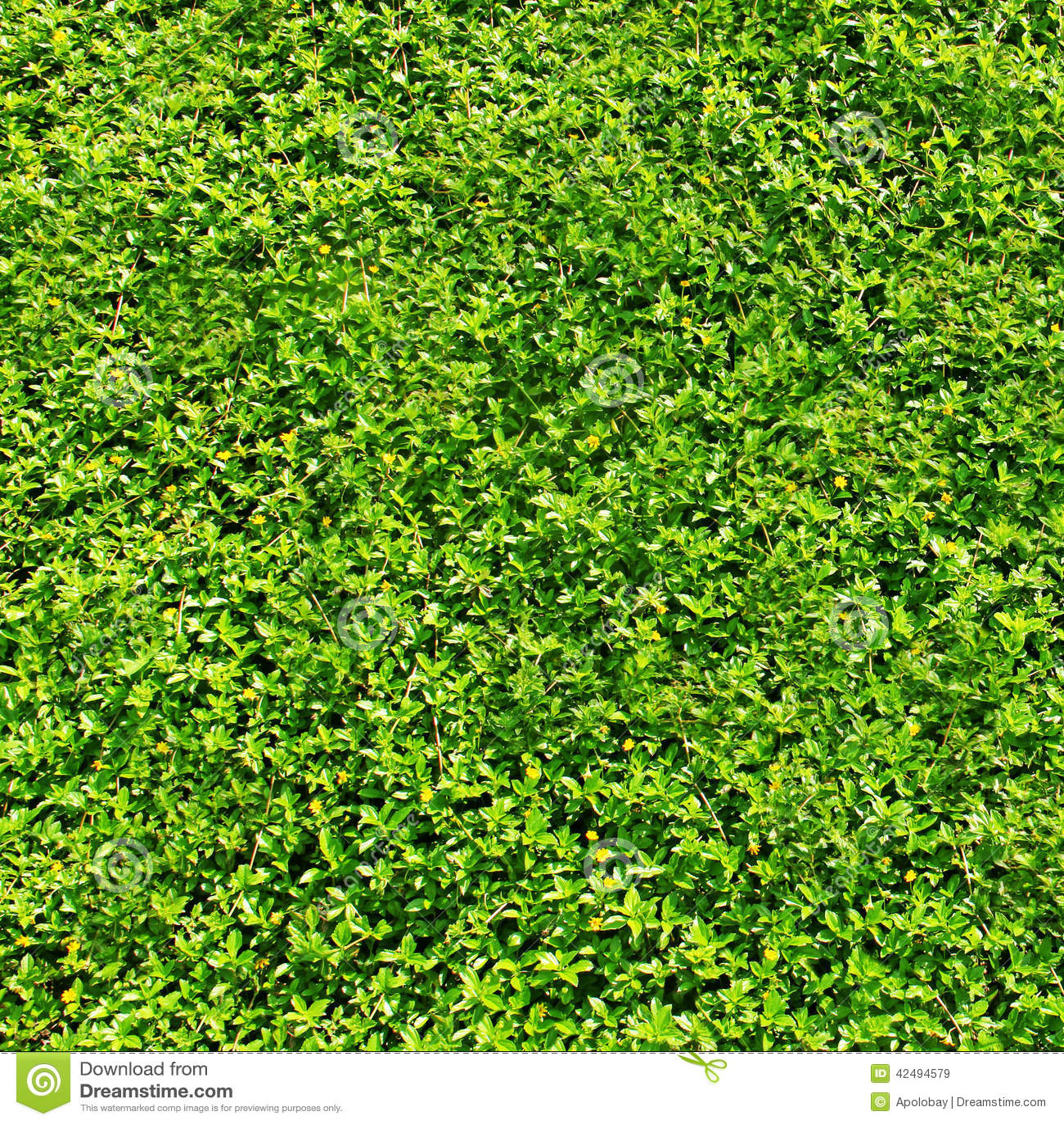 Texture Fresh Green Grass Or Foliage Stock Photo Image