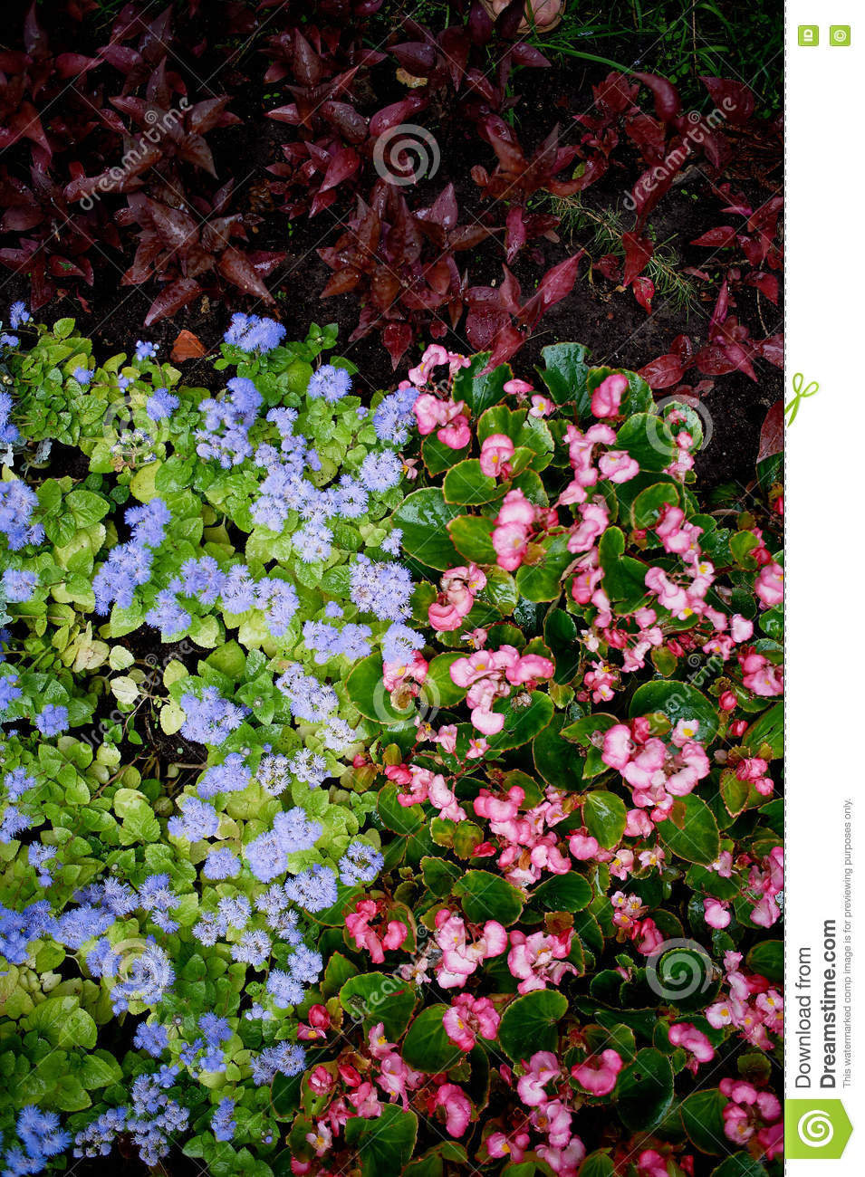 Texture of groundcover plants and flowers blue pink green leaves texture of groundcover plants and flowers blue pink green leaves izmirmasajfo
