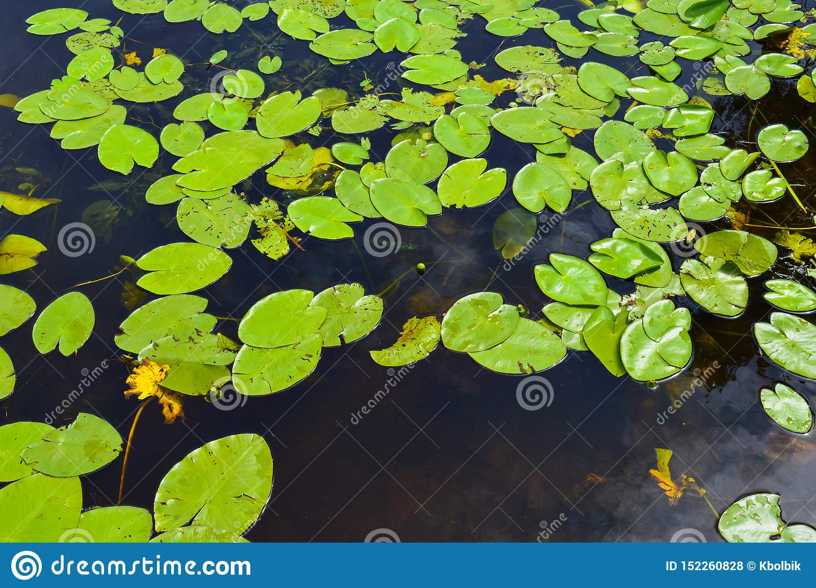 474 Lily Pad Texture Lake Photos Free Royalty Free Stock Photos From Dreamstime