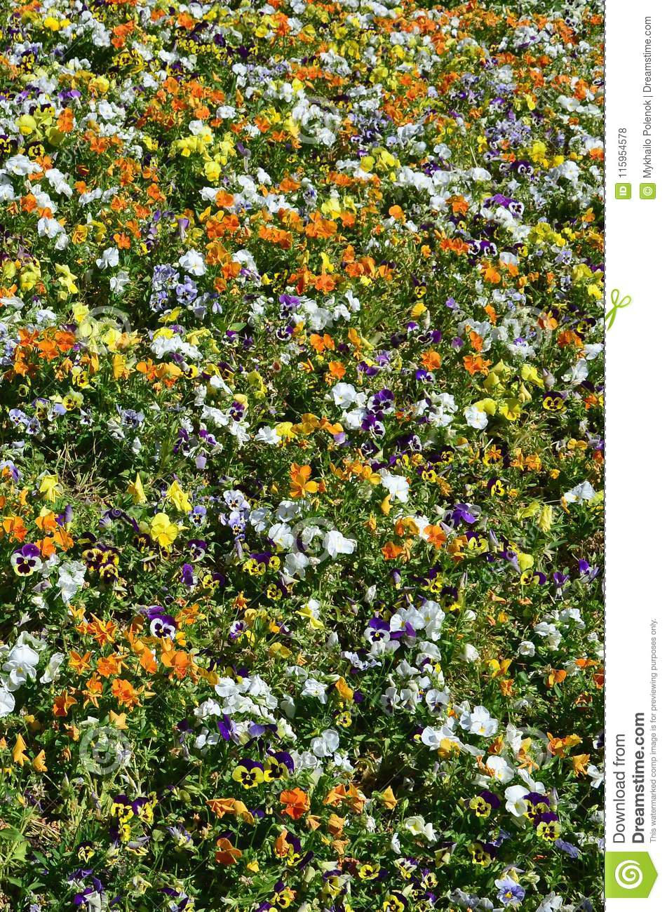 The texture of a large number of different colorful flowers planted in a flower be