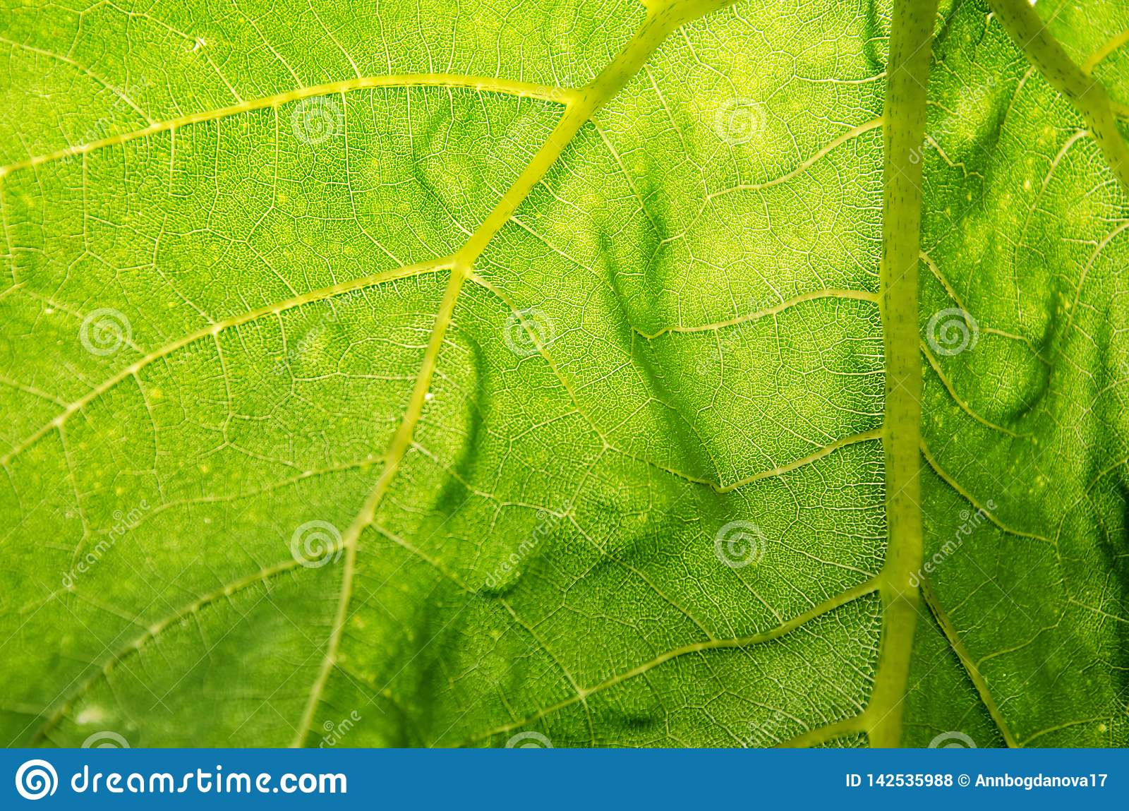 Texture of leaves of green color