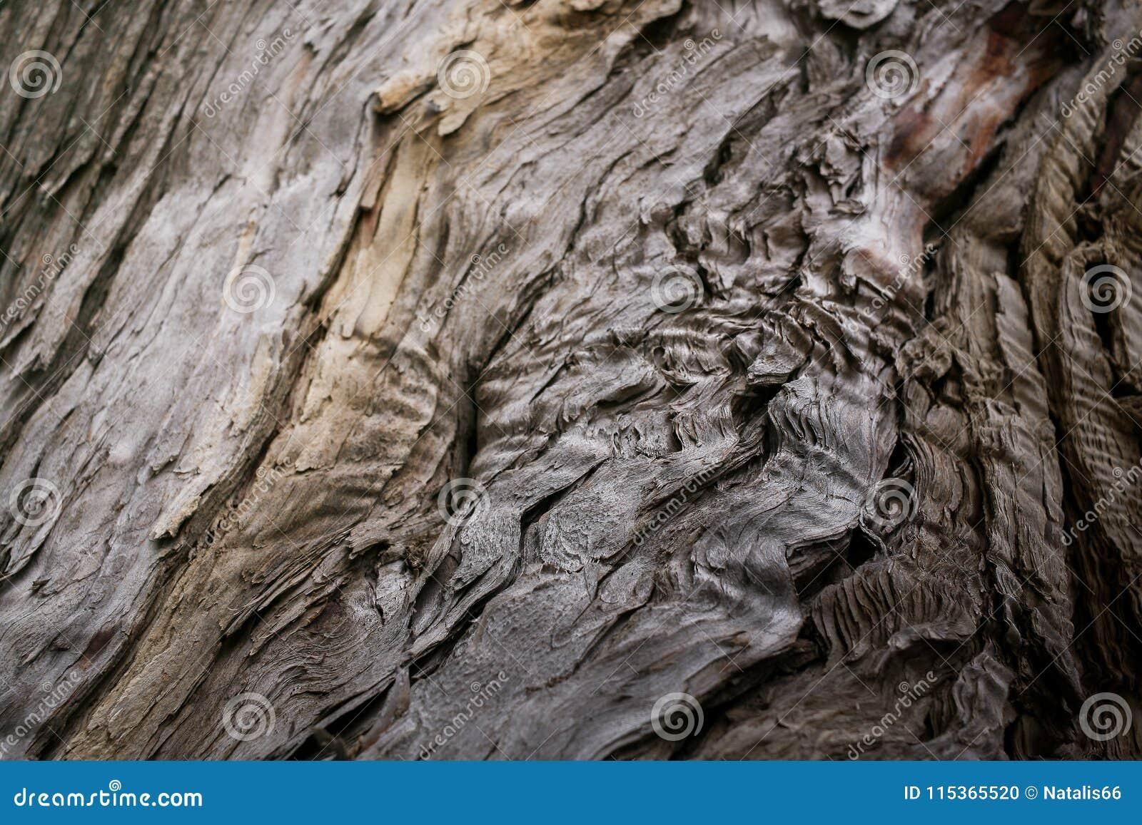 Texture naturelle en gros plan de la vieille chute bois à part putréfié Foyer sélectif