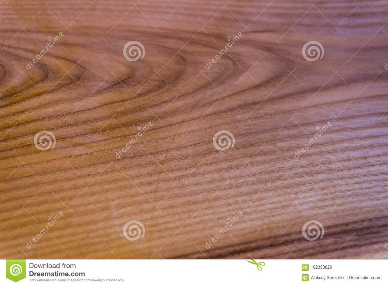 Texture of an oak tree, background