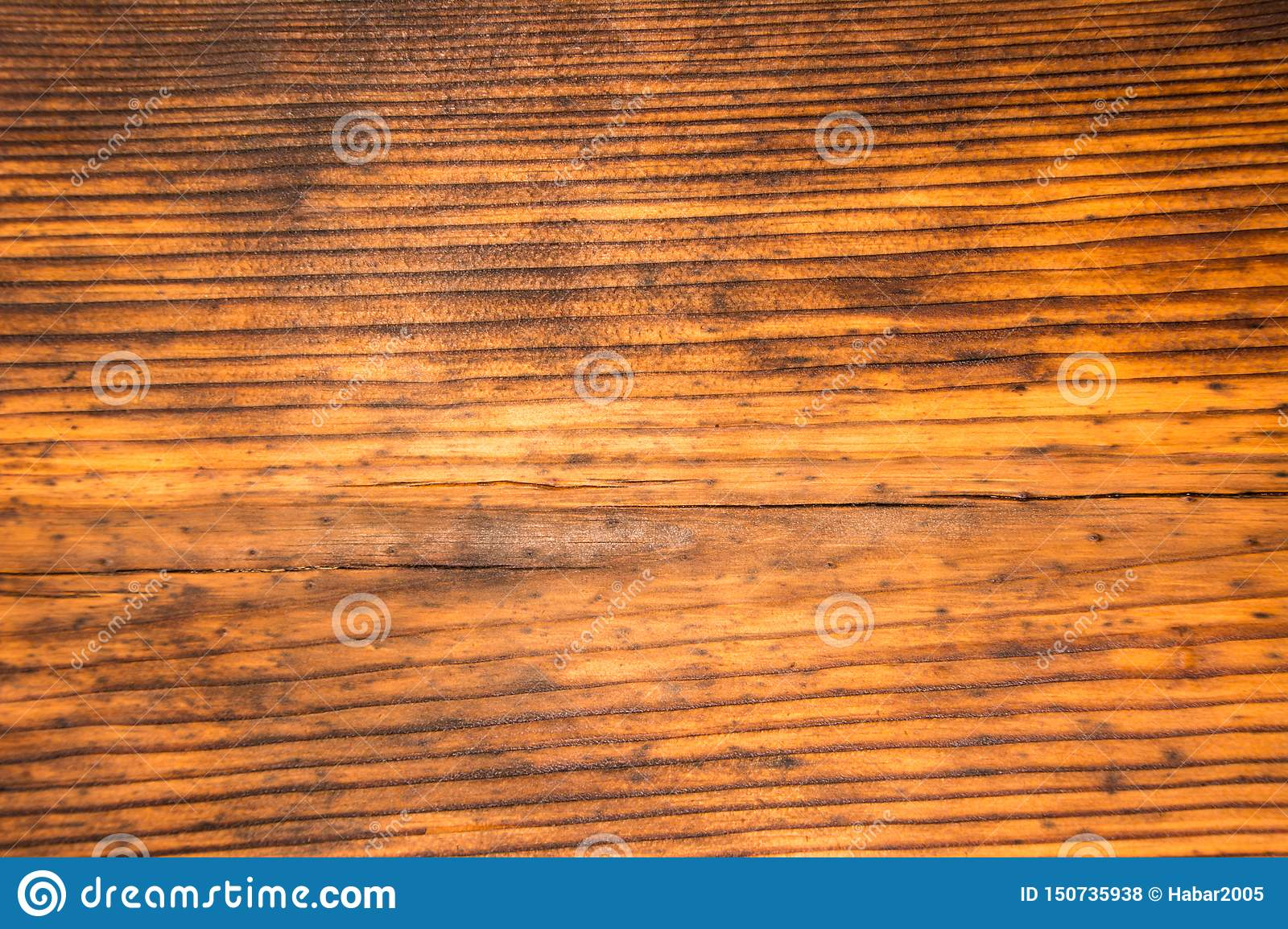 The texture of the old pine. Wood texture
