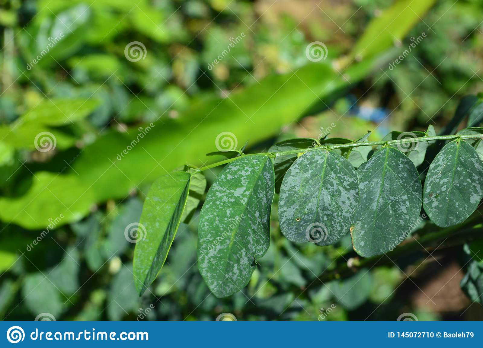Texture and photos of green leaves in a tropical climate