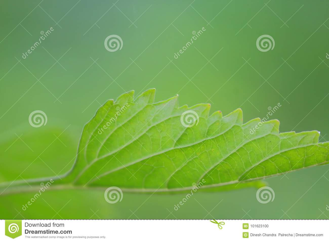Texture in plant of green leaf, natural green background