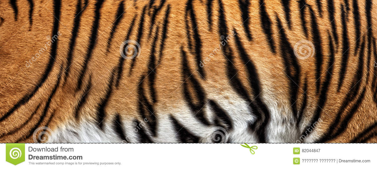 Real Tiger Fur Texture Striped Pattern Background Royalty ... - photo#19