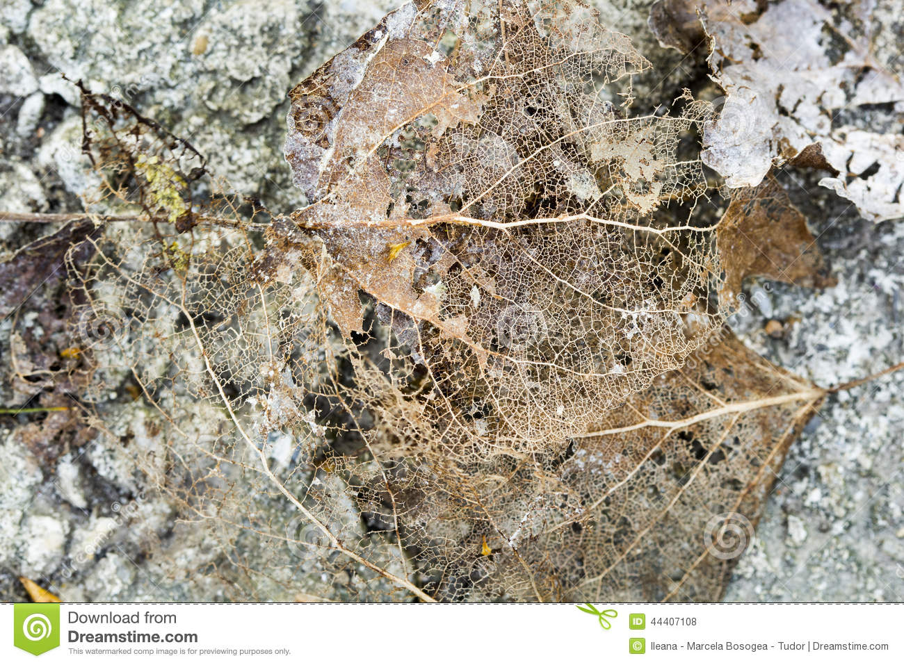 Texture with rotten leaves with fibers on a concrete surface
