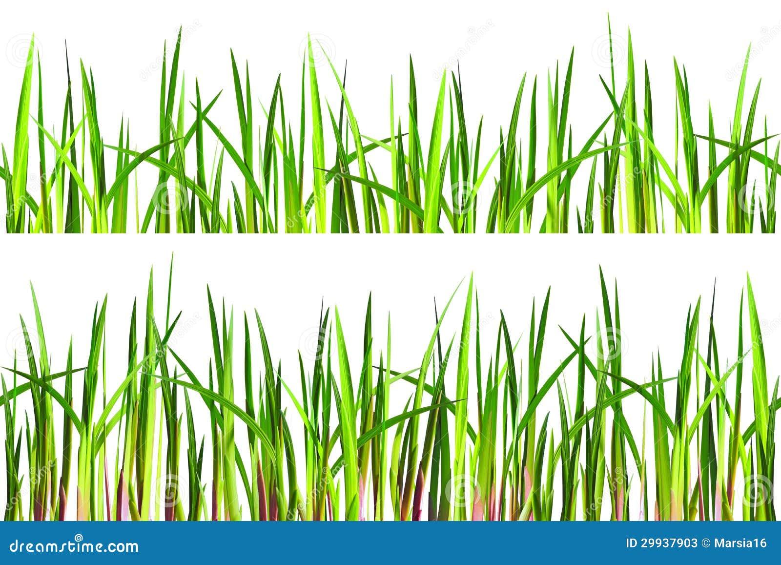texture sans couture d 39 herbe sur le blanc image stock
