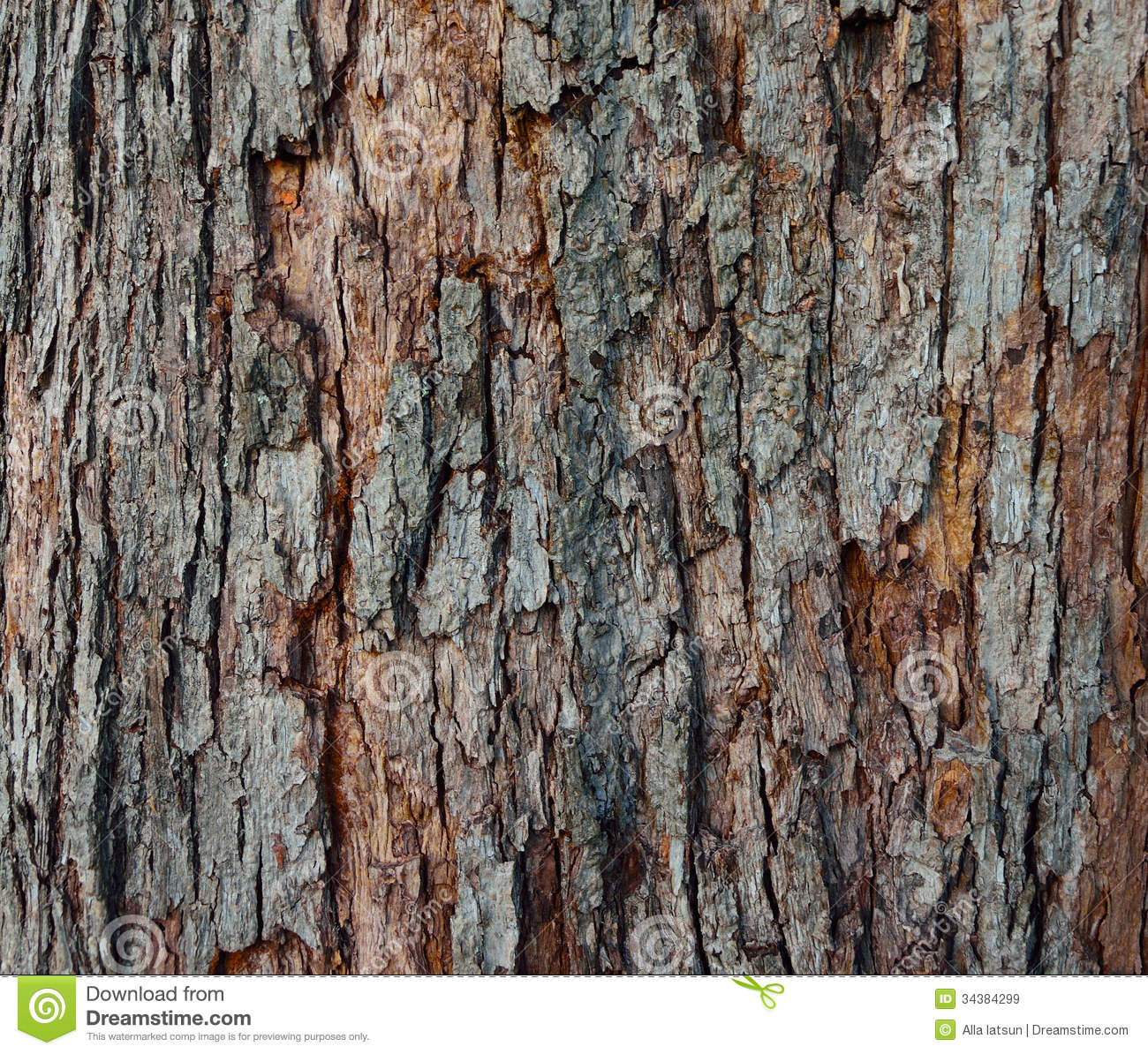 The Texture Of Tree Bark Close Up Stock Image Image Of