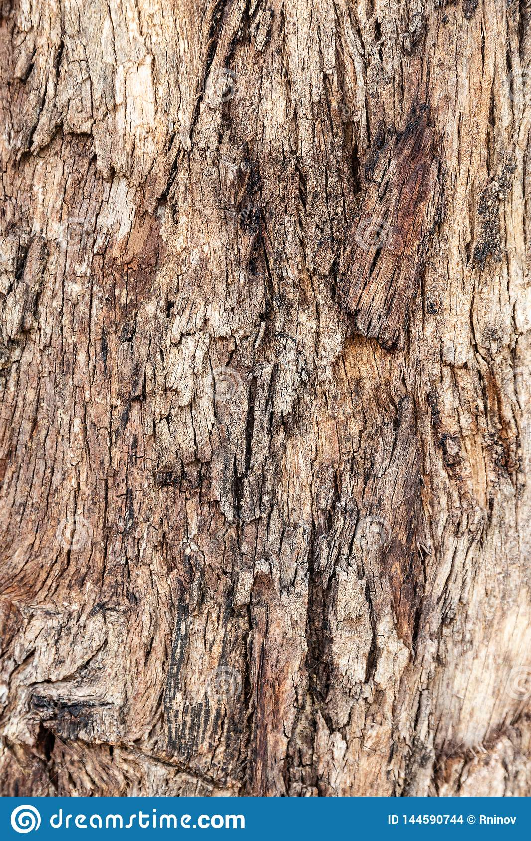 Texture of tree bark