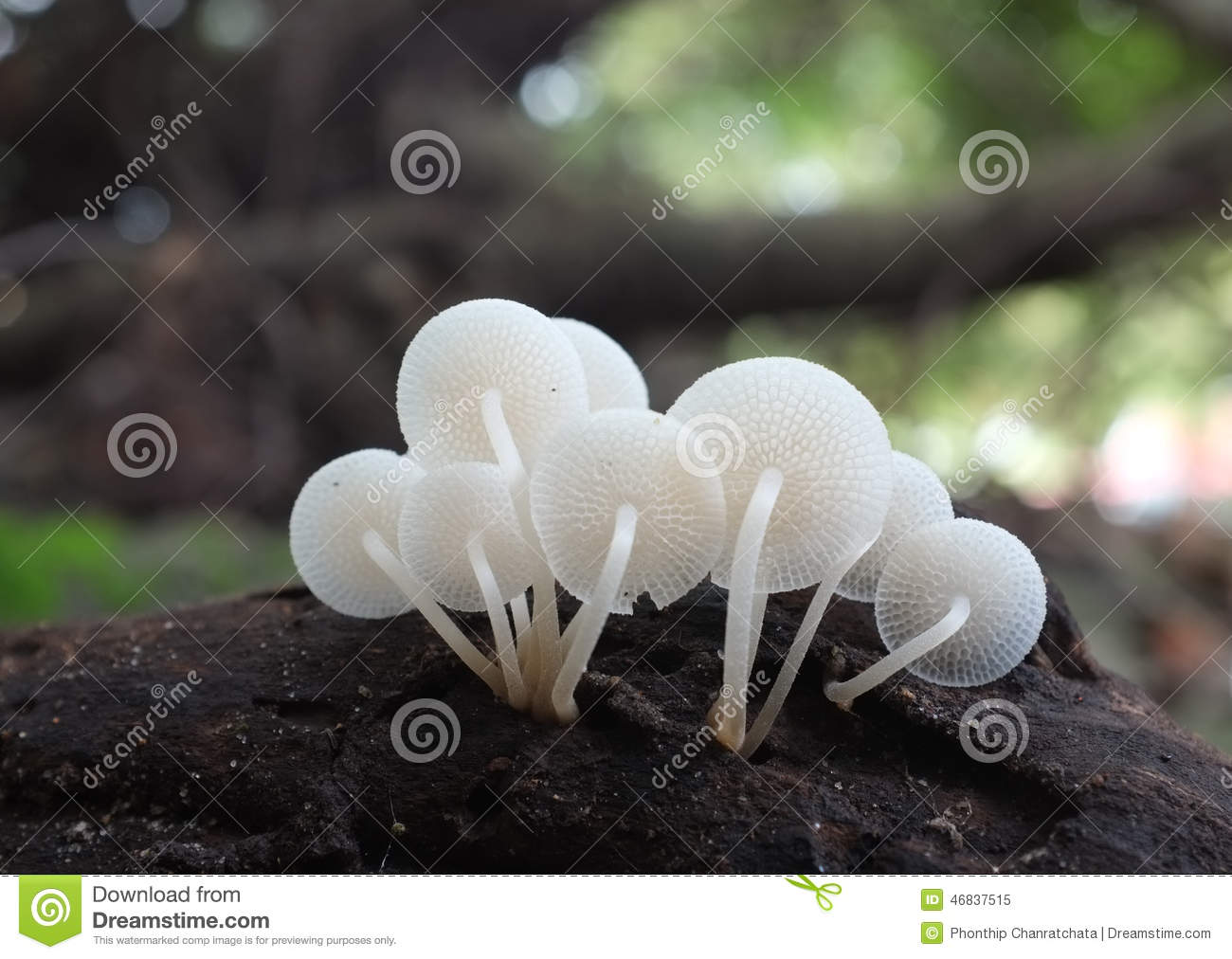 mushrooms in the woods on a white background royalty free fudge clipart Book Clip Art