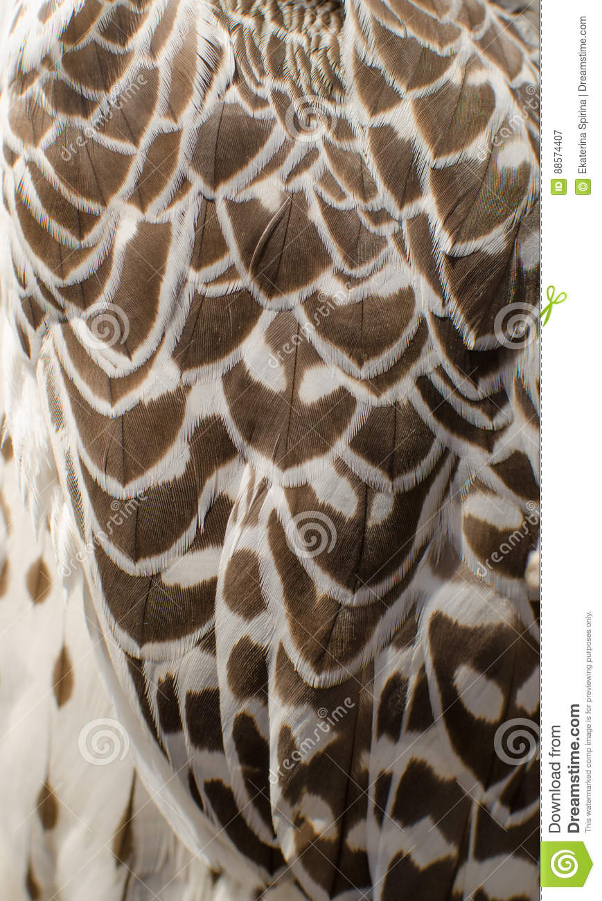 Texture Of White Witn Black Feathers Of Barn Owl Stock ...
