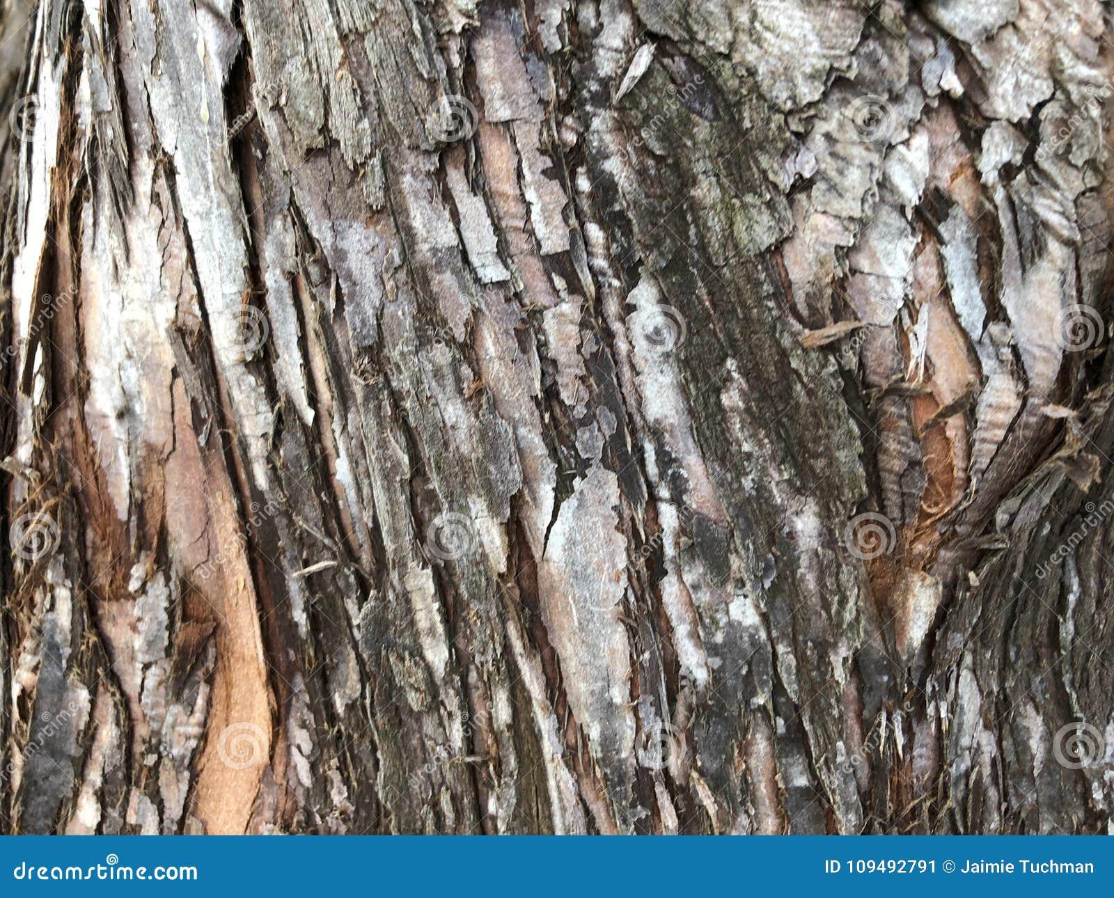 metasequoia crack