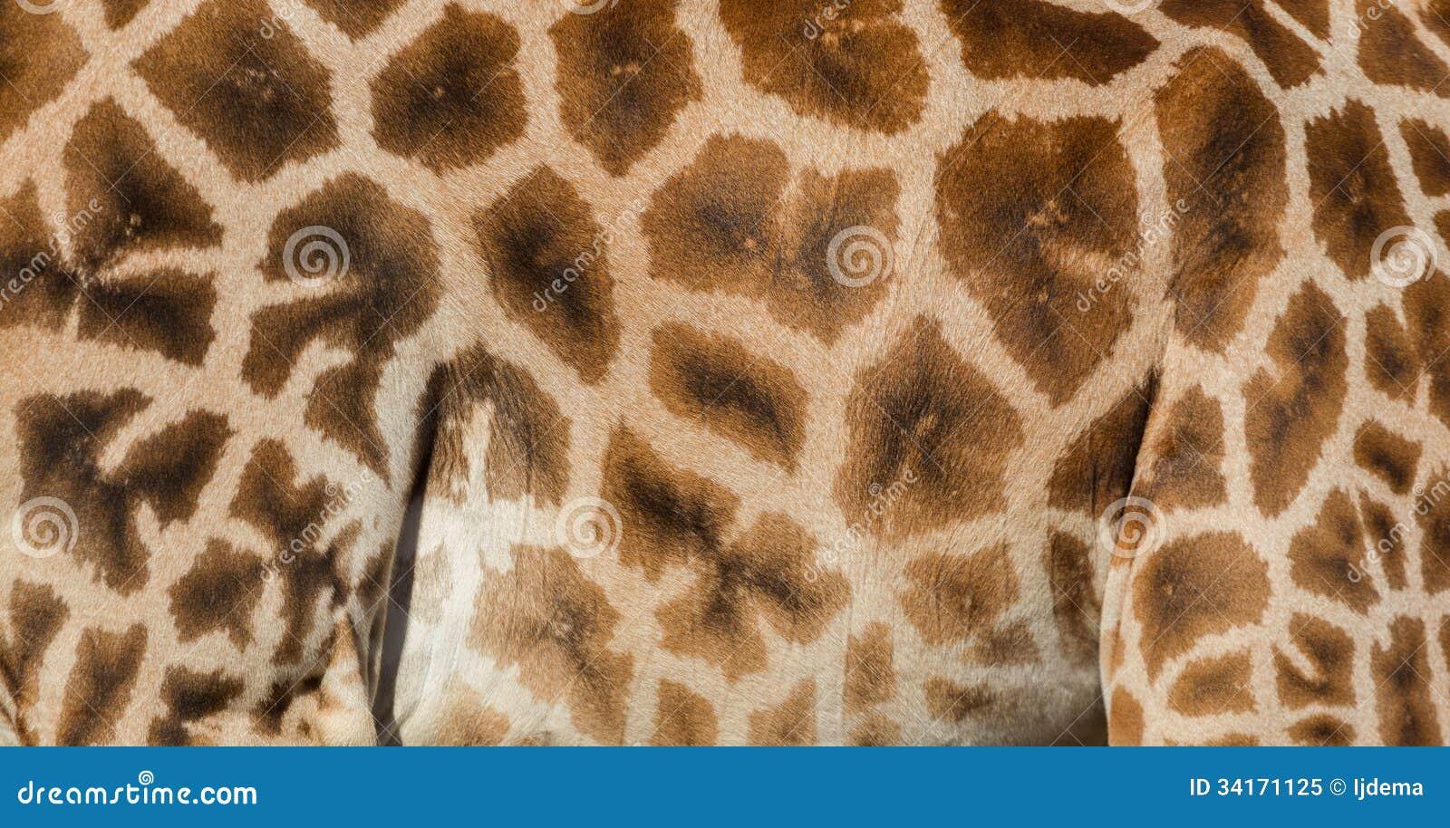 Textured skóra żyrafa