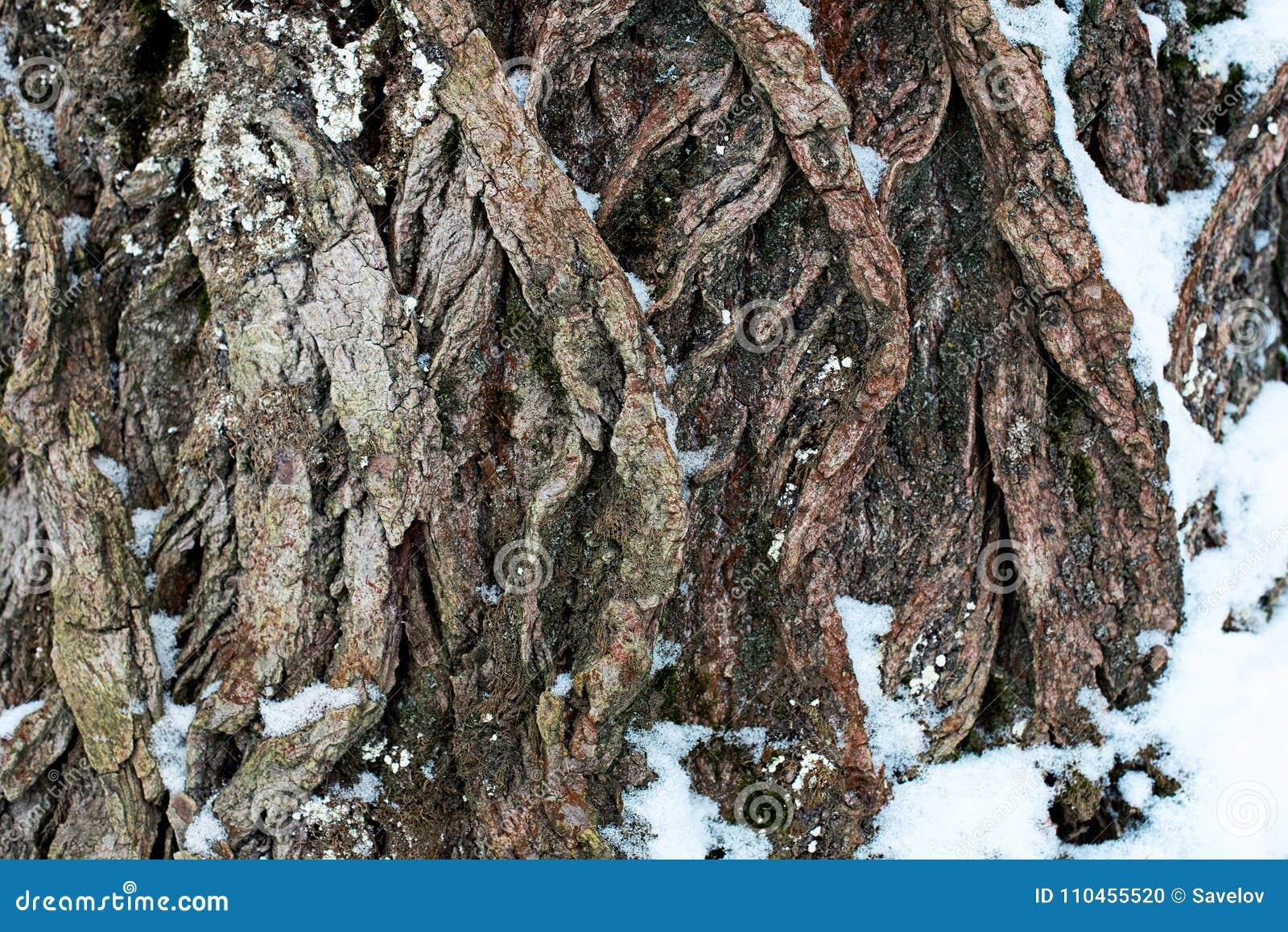 Texturerad yttersida av ett träd i snön