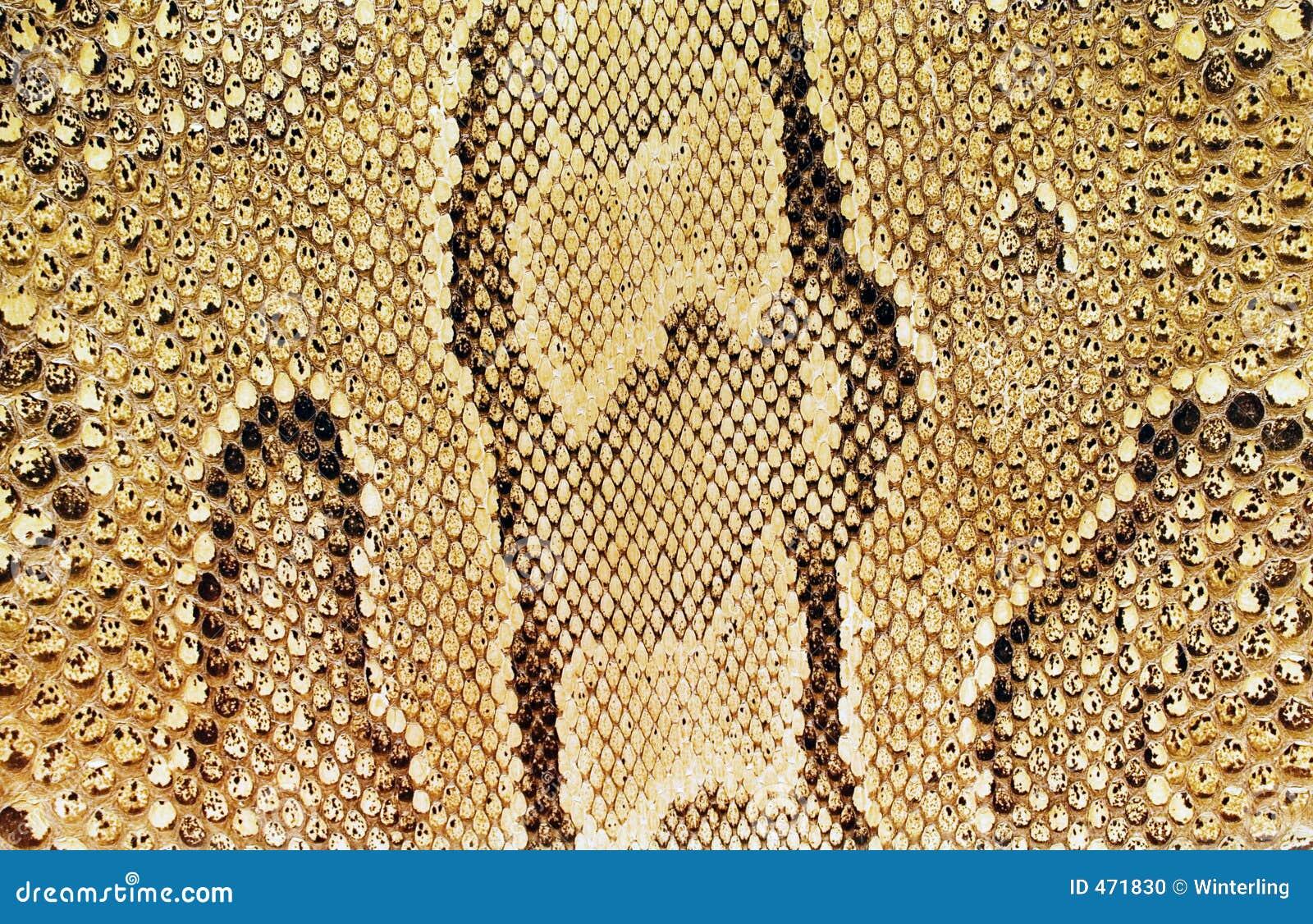 Textures – Snakeskin