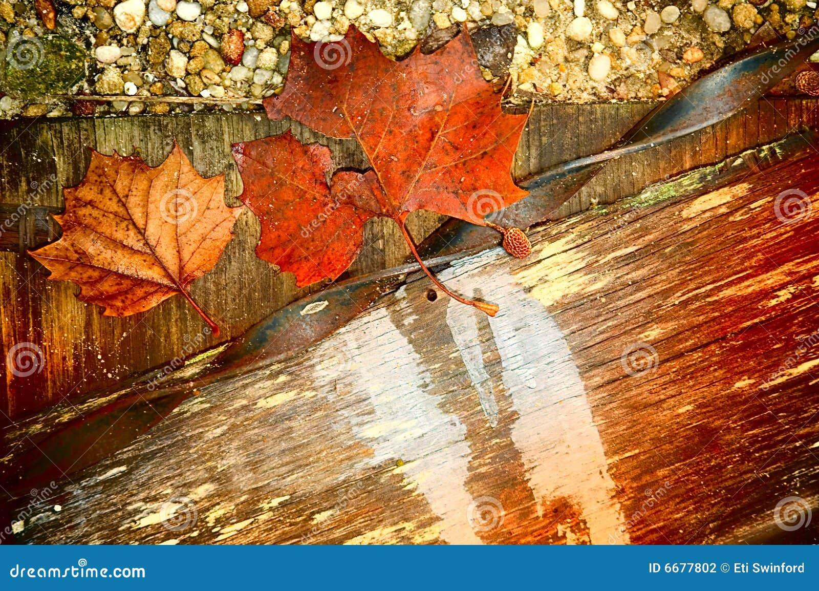 Textures d automne