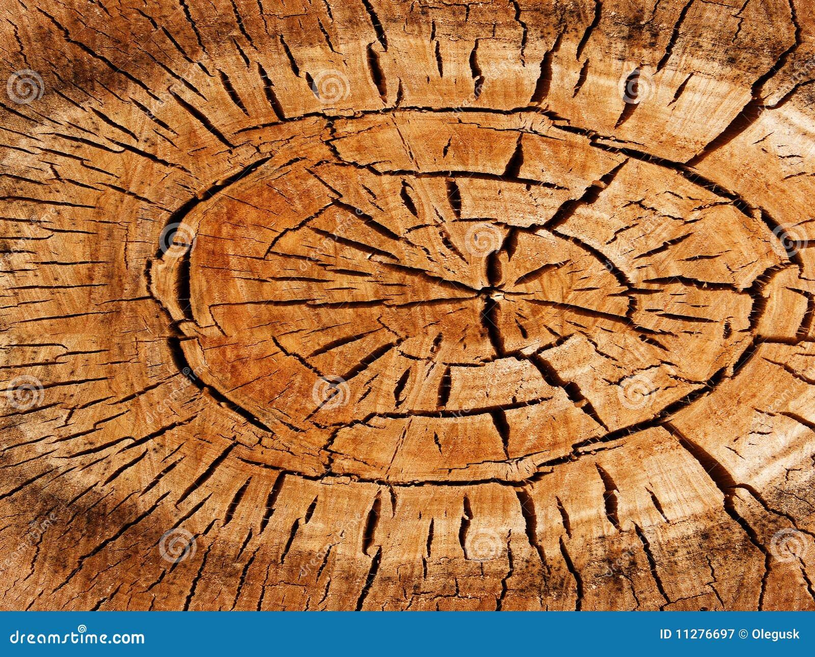 Textures el álamo del árbol