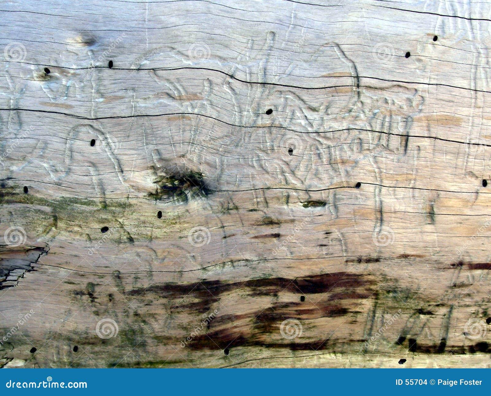 Textuur 1 van het drijfhout