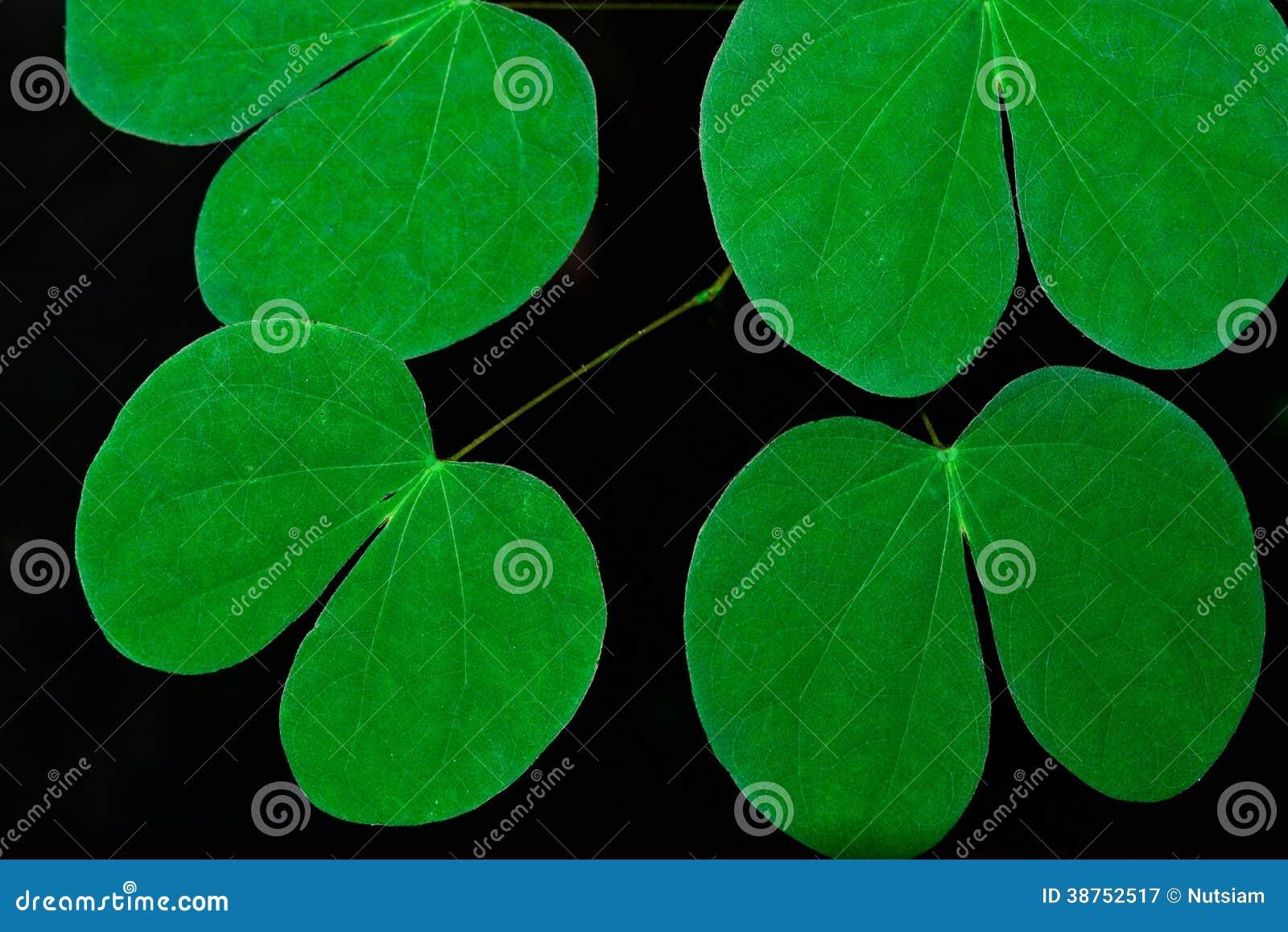 Textuur of achtergrond van bladeren