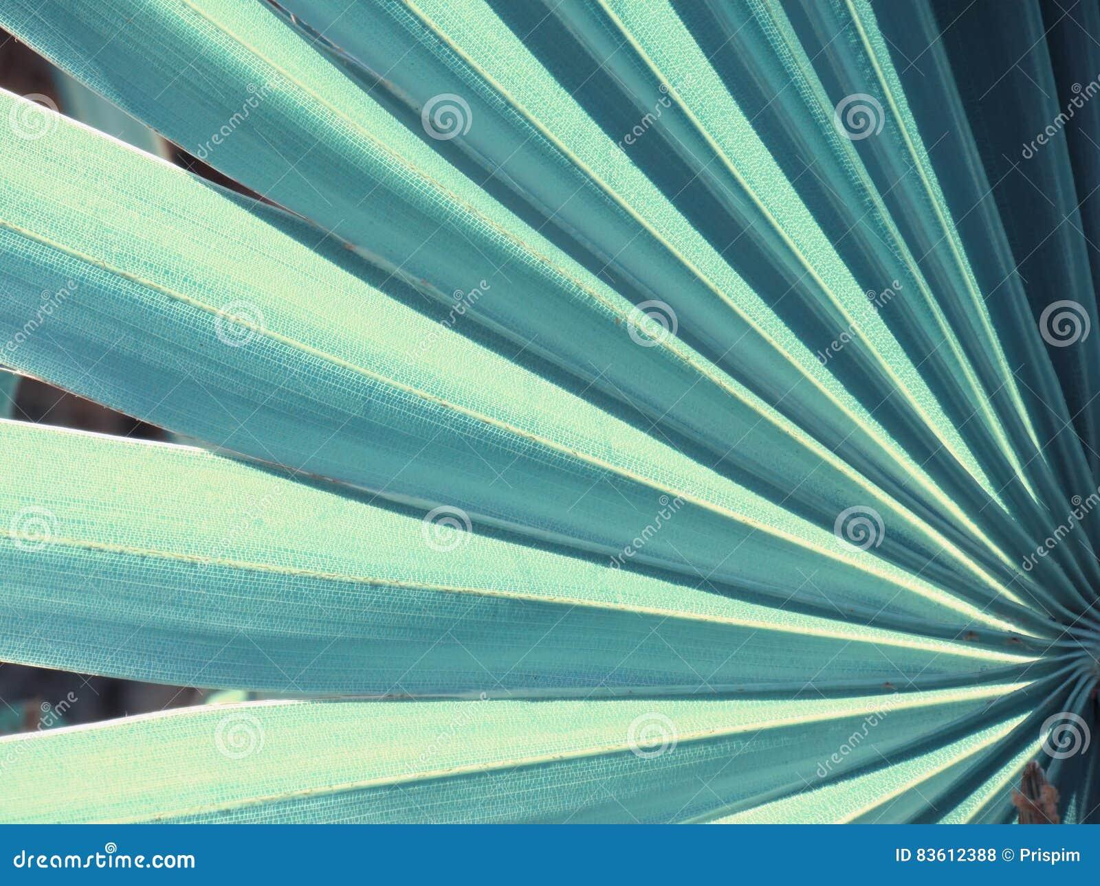 Textuur en patroon van een groen blad, uitstekende stijl