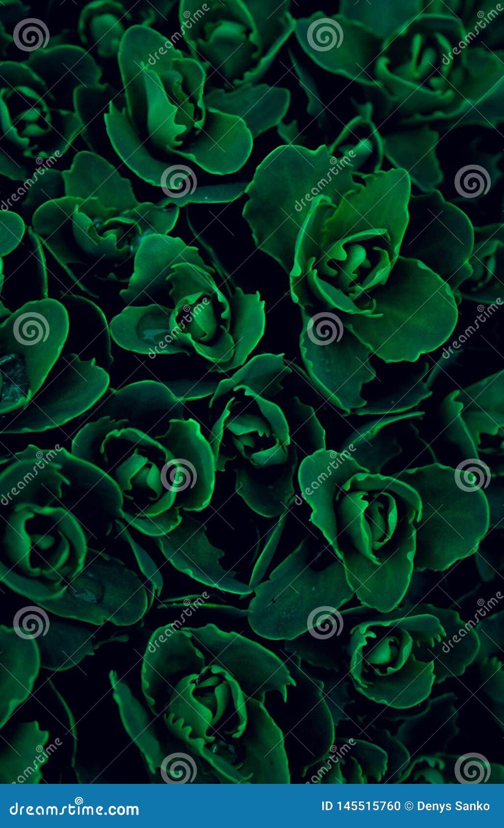 Textuur, multicolored wolfsmelk van behang de groene bloemen, doorbladerend vullend het volledige kader