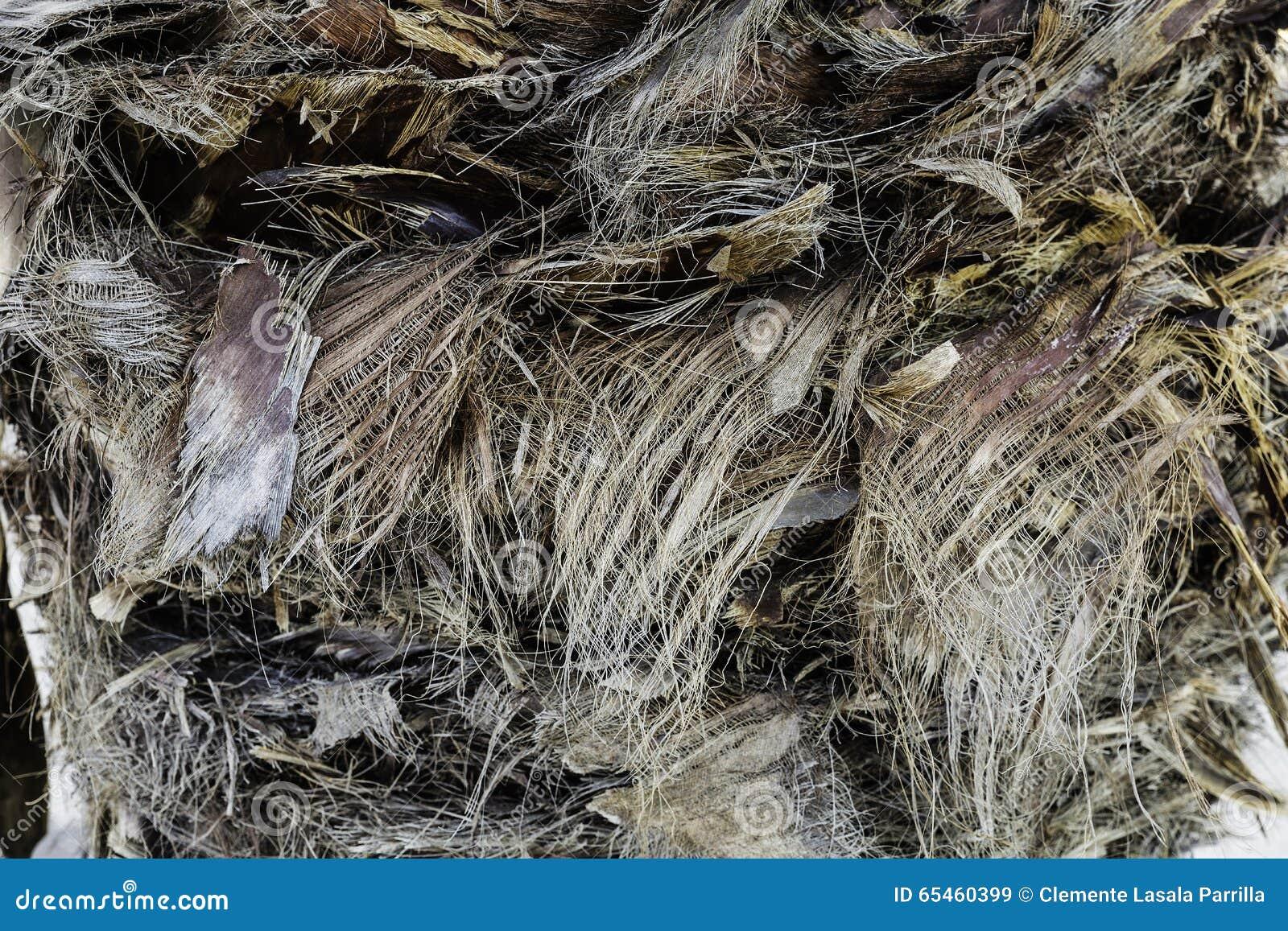 Textuur planten-vezel op boomstam van palm