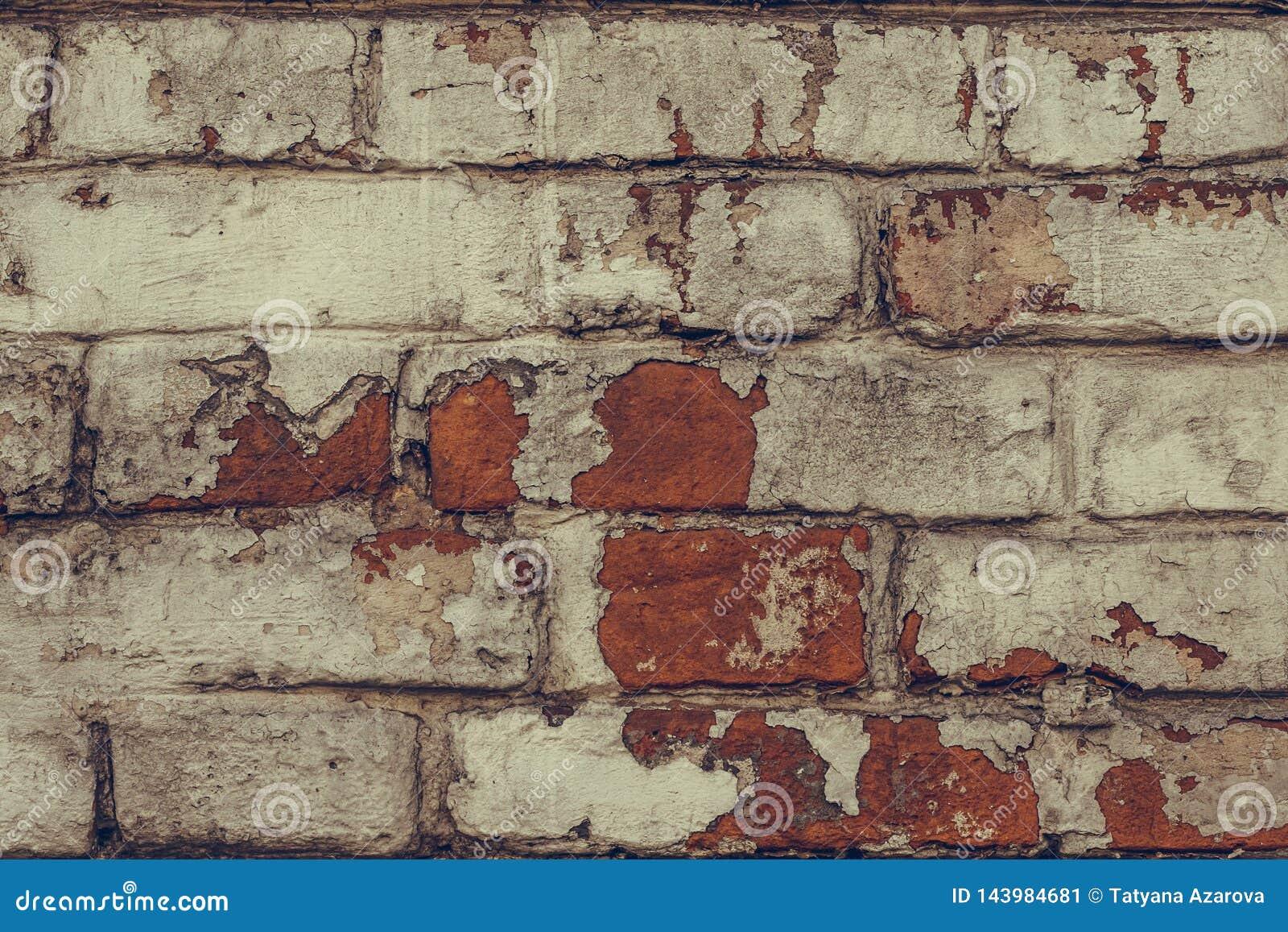 Textuur van dilapidated bakstenen muur dicht omhoog Vuile sjofele bakstenen muur in witte schilverf De witte achtergrond van de b
