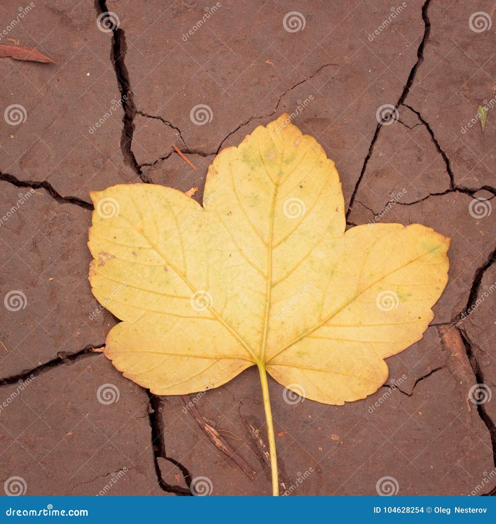 Download Textuur Van Een Geel De Herfstblad Gevallen Aan De Grond Stock Foto - Afbeelding bestaande uit autumn, stam: 104628254