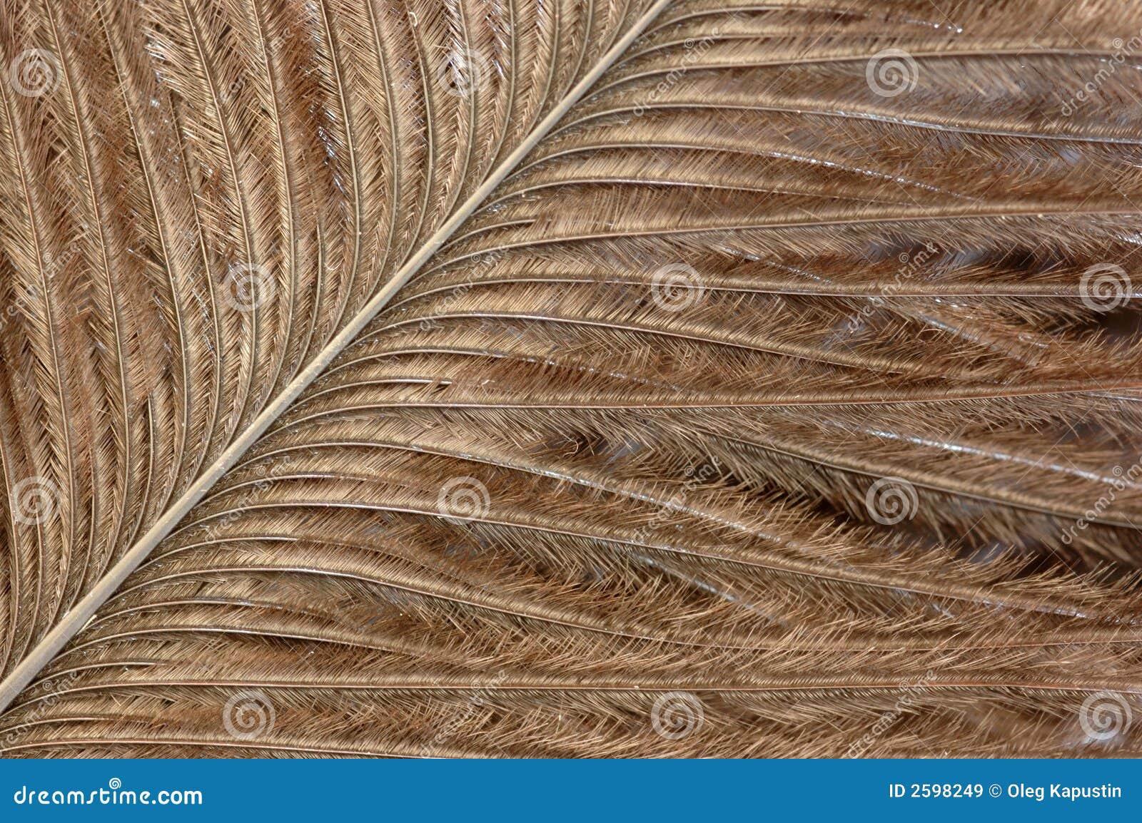 Textuur van een veer