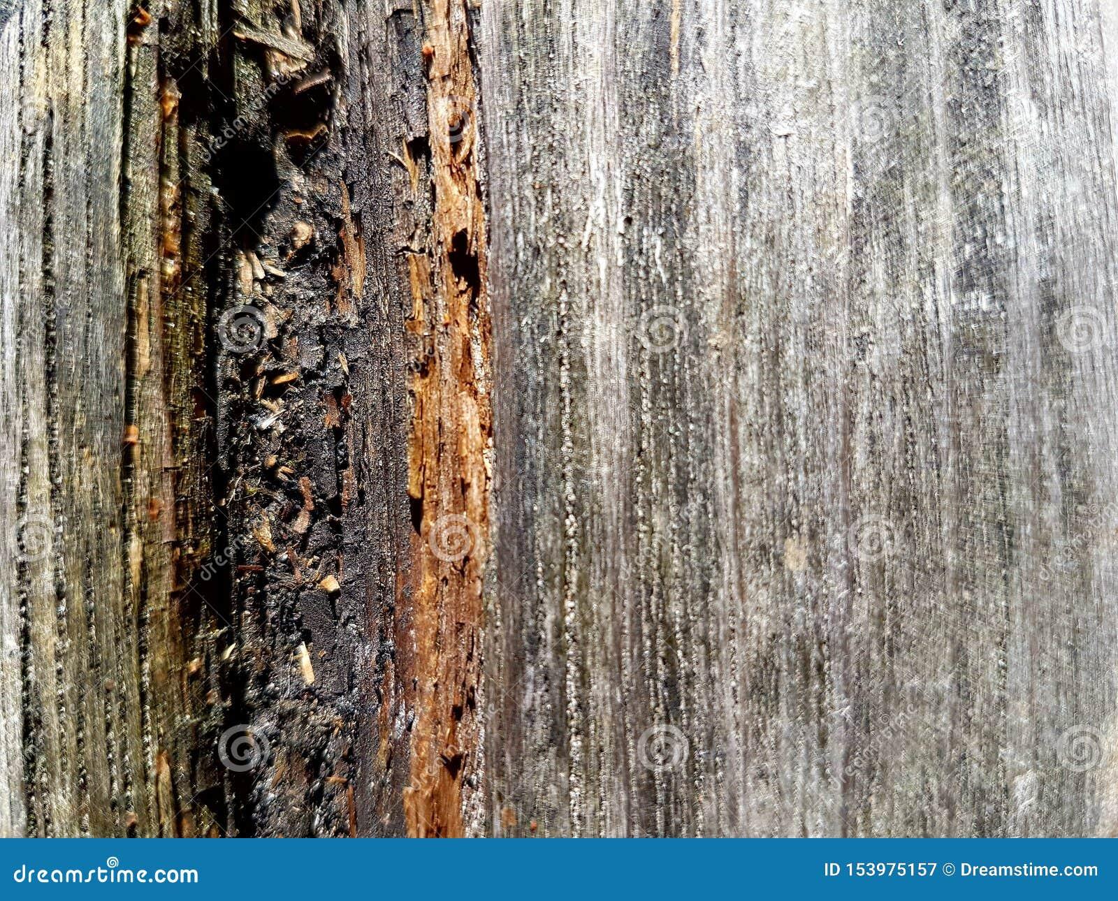 Textuur van oud doorstaan hout