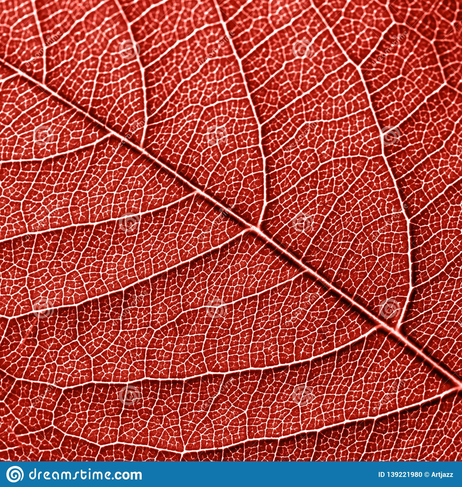 Texured natural veined leaf pattern background for layout in a color of the year 2019 Living Coral. Macro photo. Top