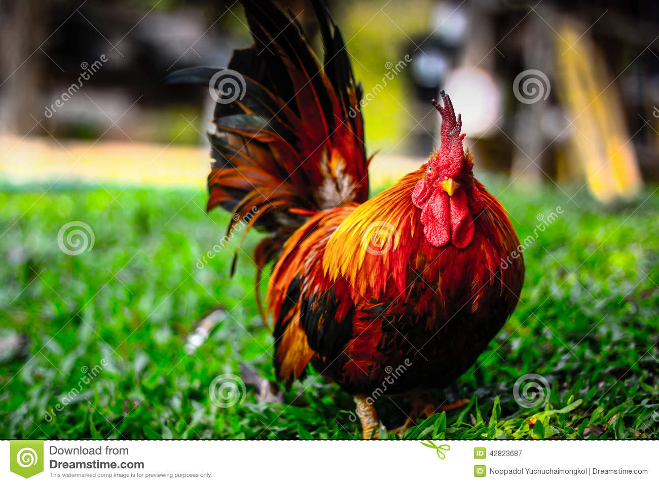 What is the smallest rooster size?