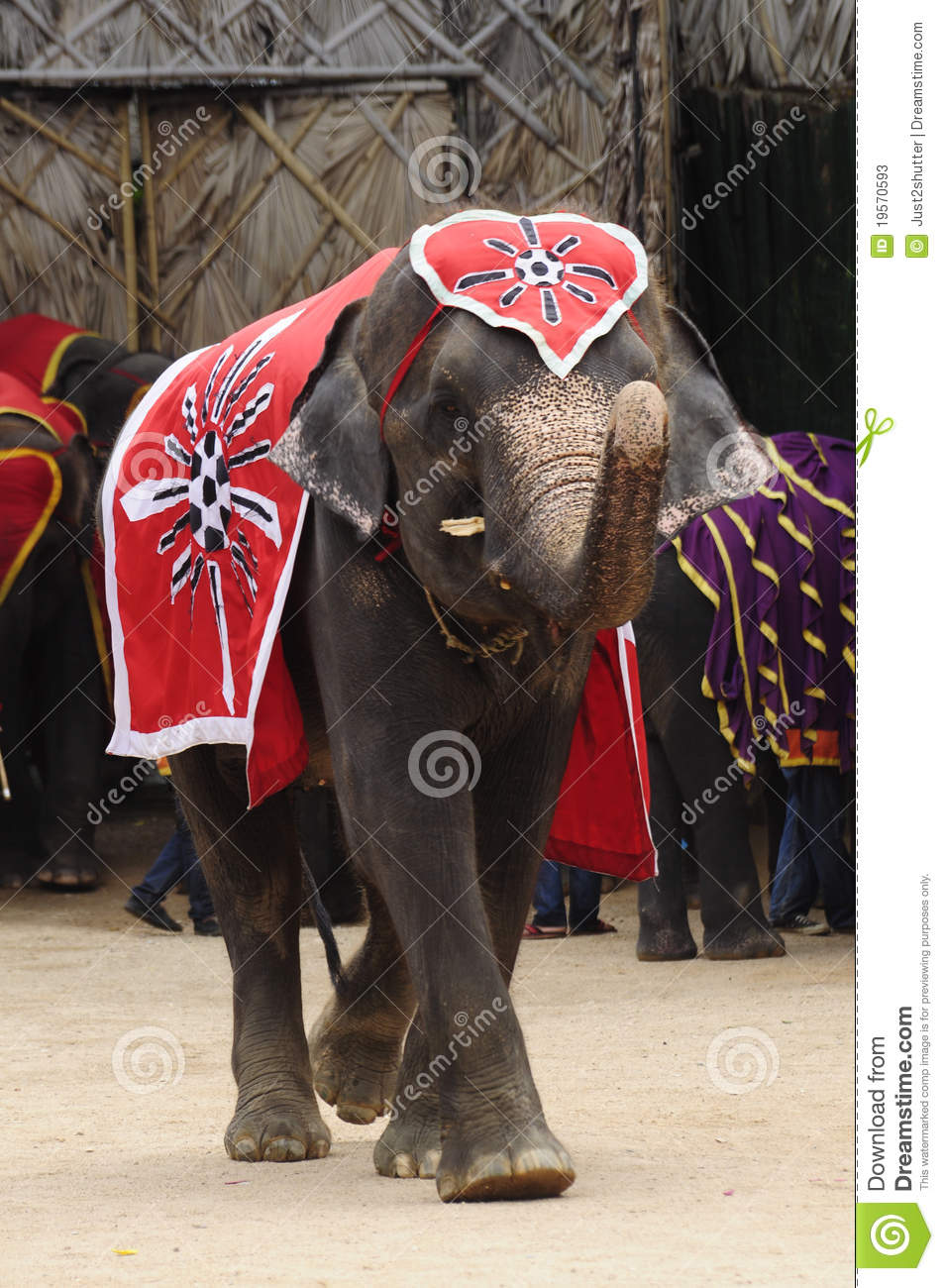 Thai Elephant Wear Red Cloth Editorial Stock Photo Image