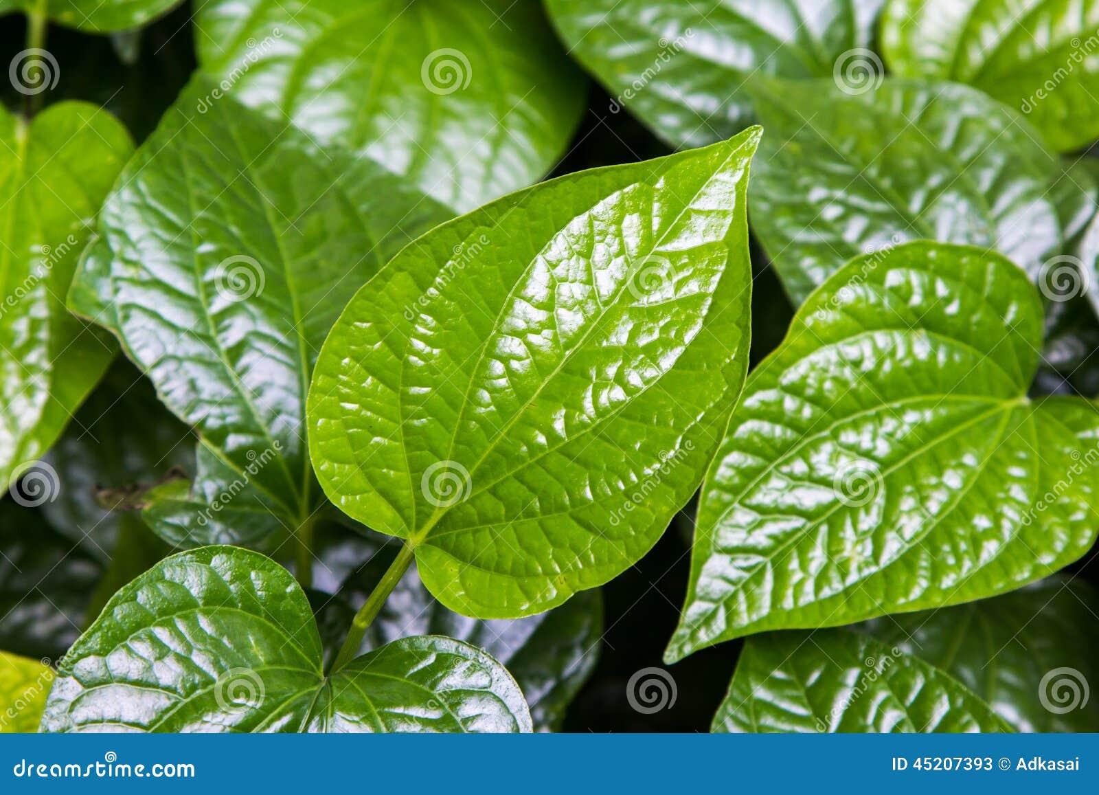 Green Leaf Thai Food
