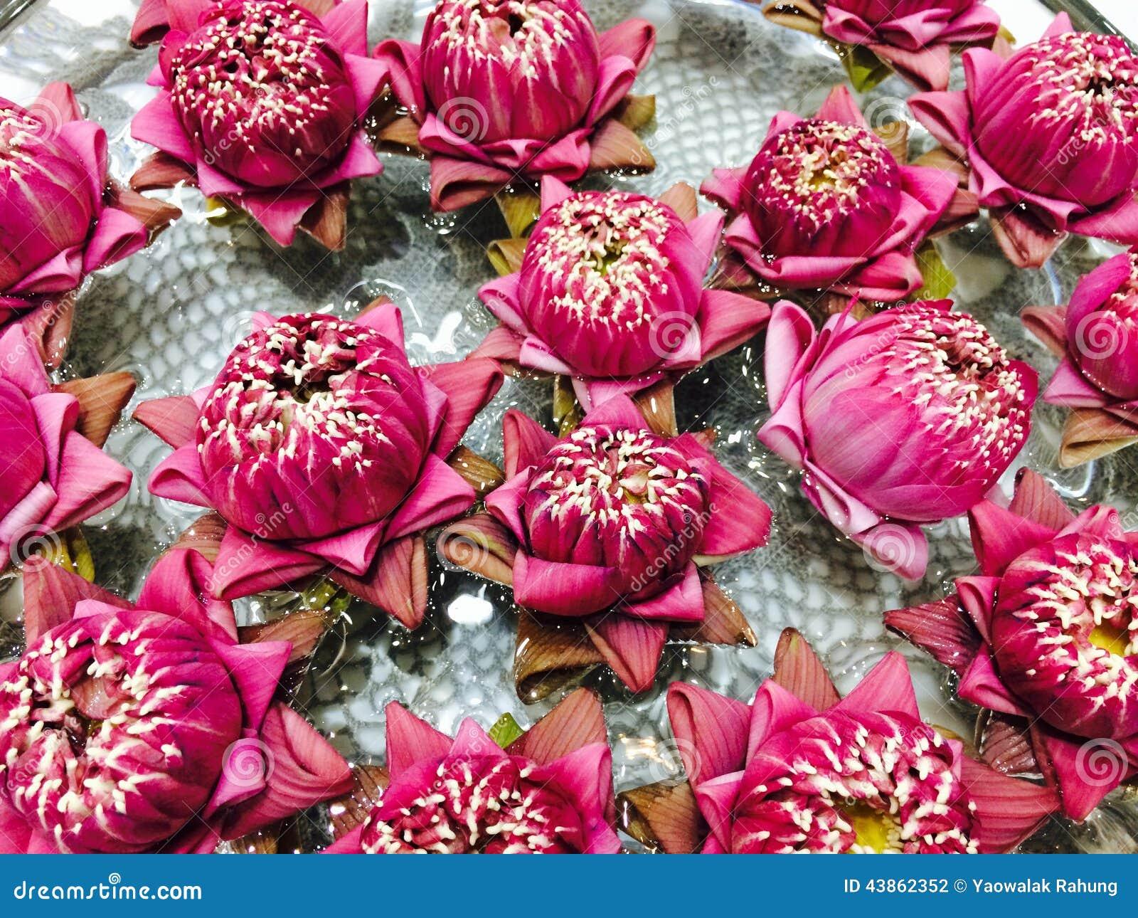 Thai pink lotus flower stock photo image of tree garden 43862352 thai pink lotus flower izmirmasajfo