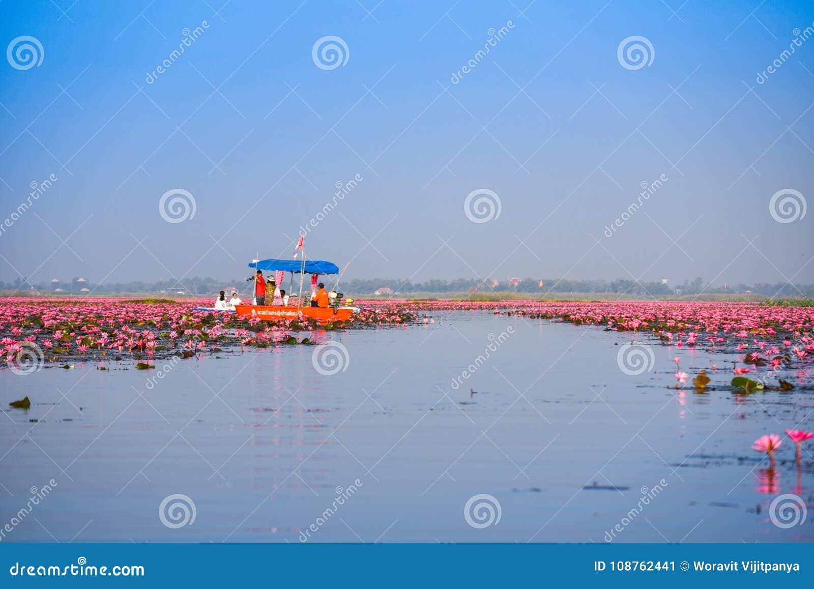 boat Lily thai