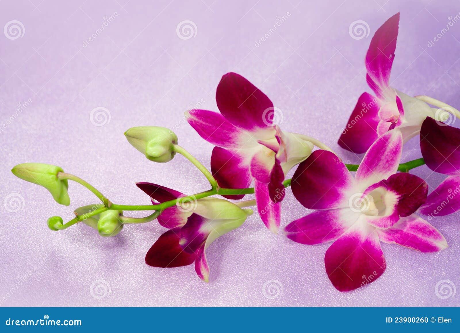gratis film orkide thai