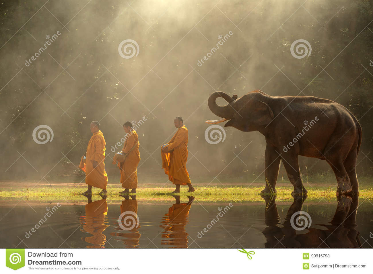 Thailand Buddhist monks walk collecting alms with elephant is tr