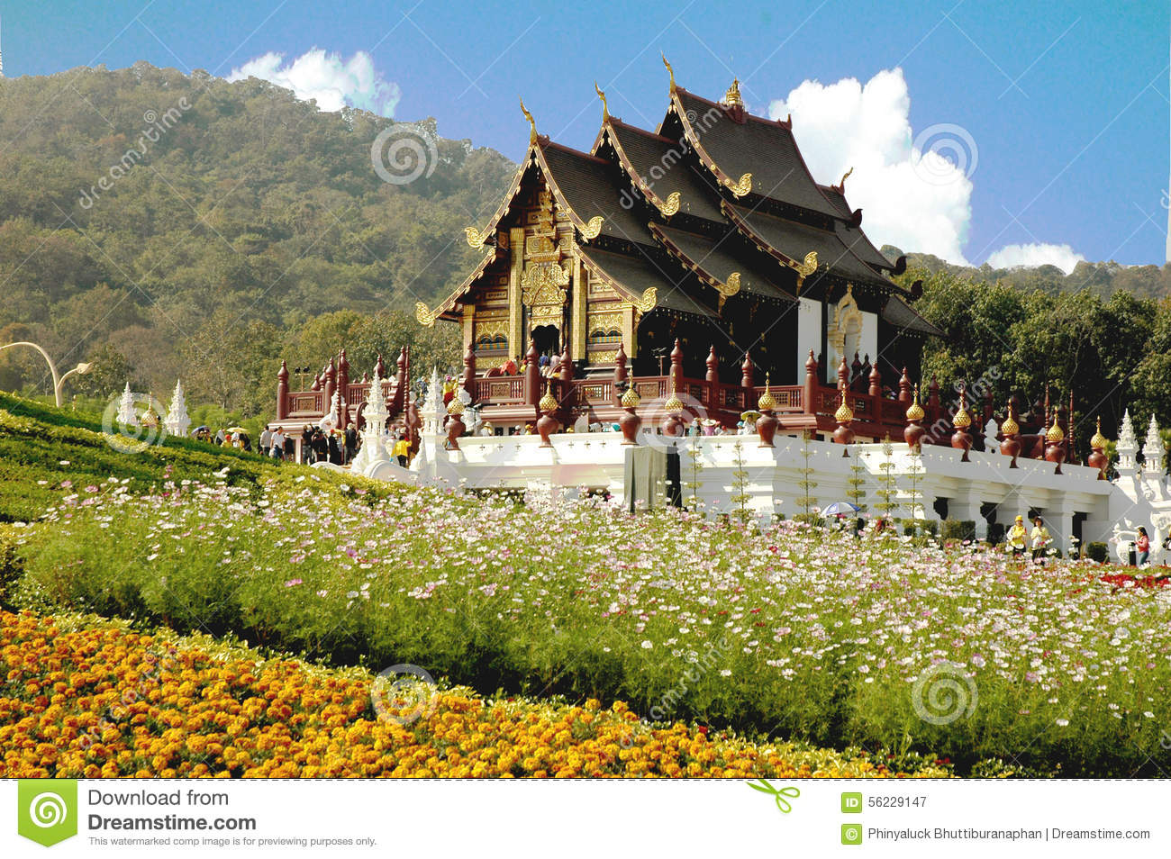 Thailand the most beautiful flowers garden in thailand stock thailand the most beautiful flowers garden in thailand izmirmasajfo