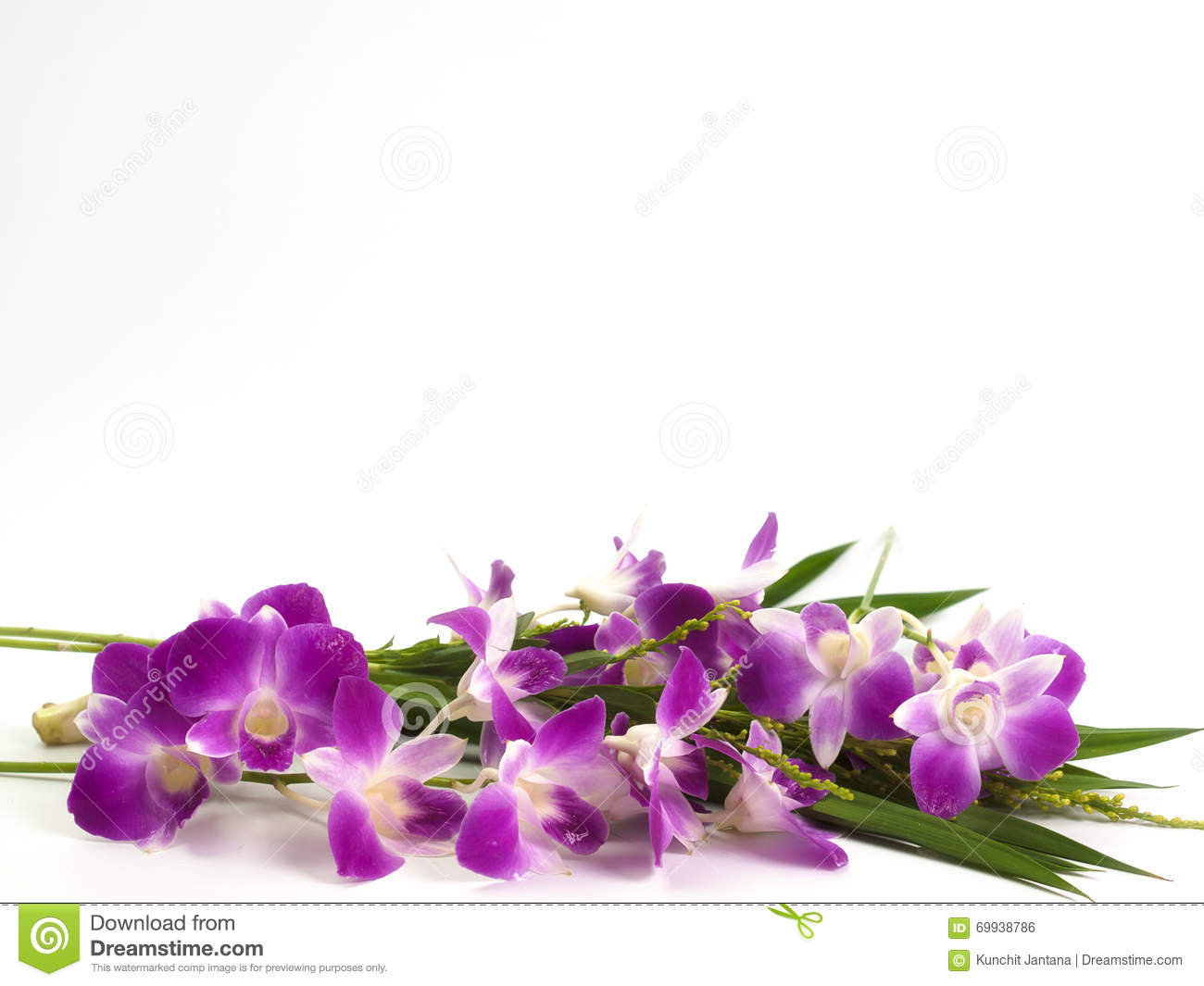 Thailand Orchid, Purple Color Isolated On White Background. Stock ...