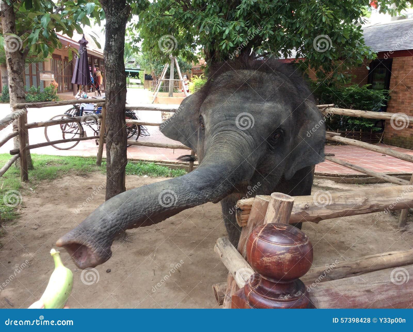 Thaise Babyolifant in Pattaya Thailand