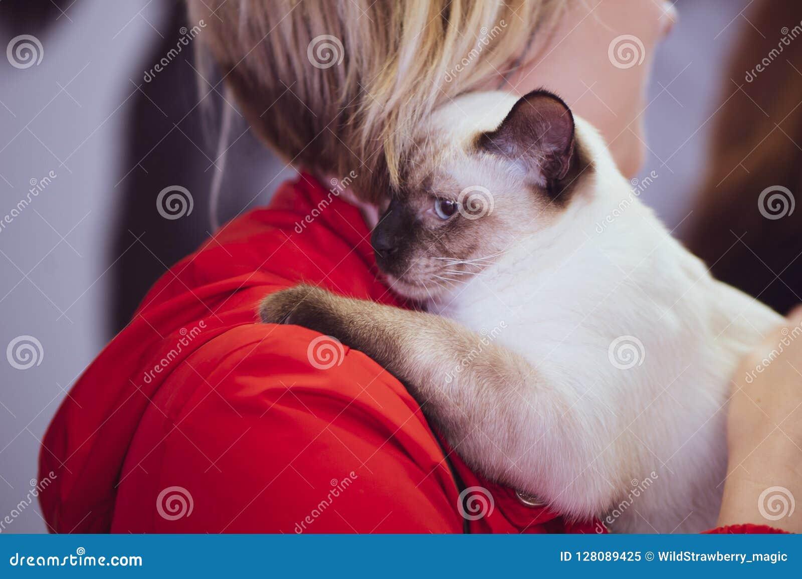 Thaise kat in de handen van de eigenaar, tentoonstelling van huisdier