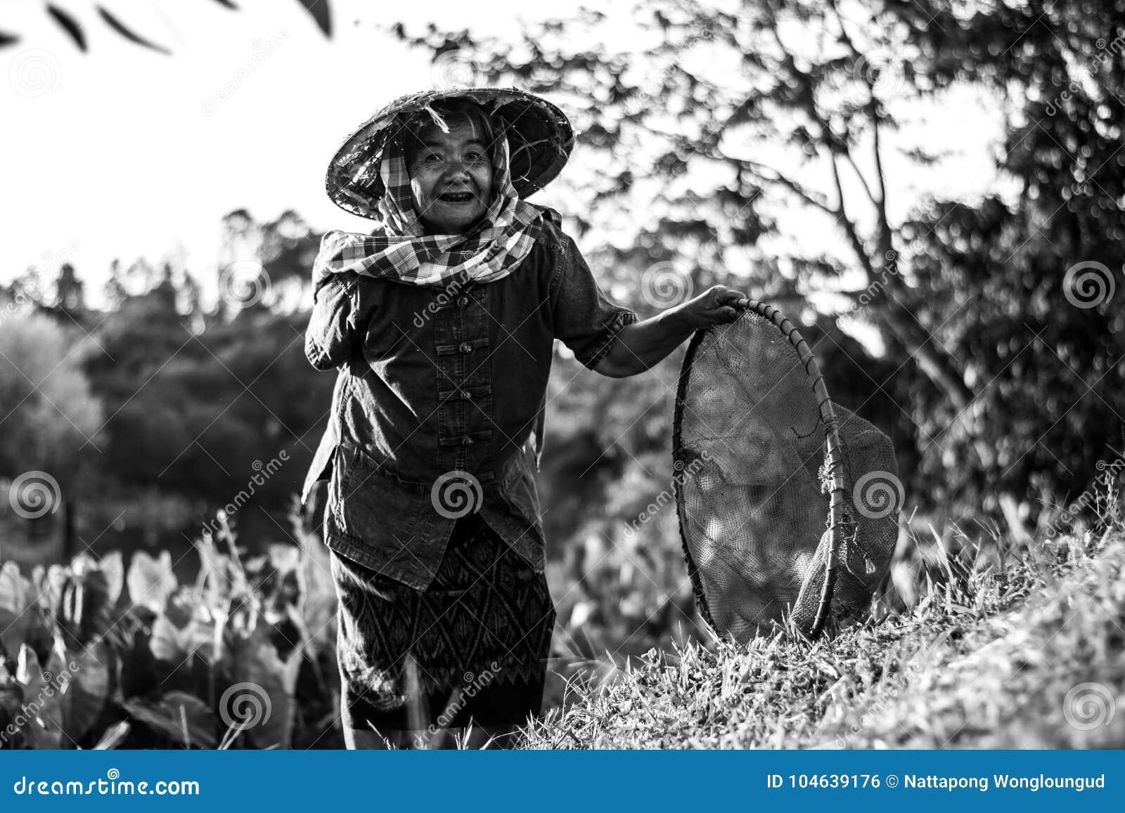 Download Thaise Landbouwerslevensstijl Stock Foto - Afbeelding bestaande uit mensen, levensstijl: 104639176