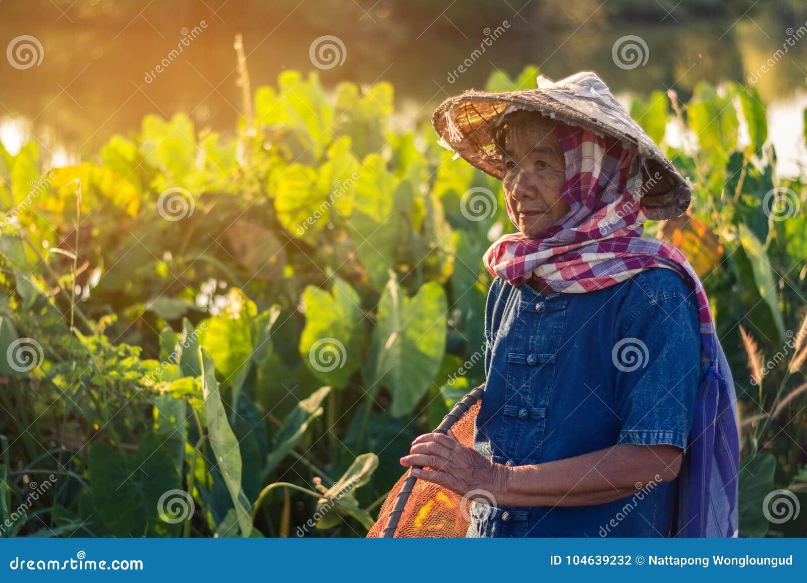 Download Thaise Landbouwerslevensstijl Stock Foto - Afbeelding bestaande uit blad, nave: 104639232