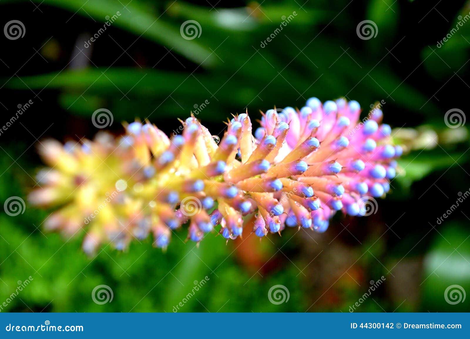 Thaise Thaise bloemen van Doi Inthanon