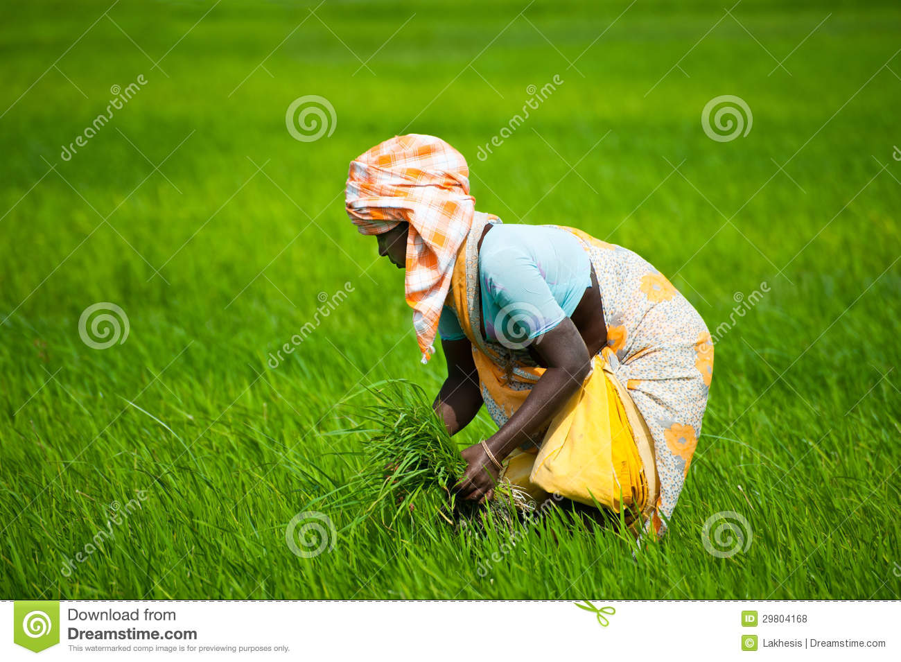 rice hindu single women Rice is one of the more commonly consumed grains, providing 20 percent of the world's energy from food chapati is a type of unleavened bread commonly consumed by people when they eat indian.